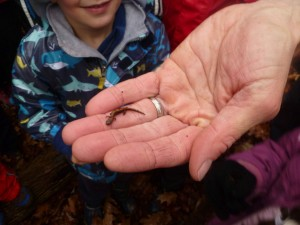 A small salamander.  The original reason we were looking under wet logs.