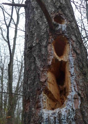 Sometimes it seems that nature has its own chainsaw.