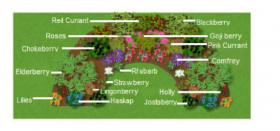 food forest concept